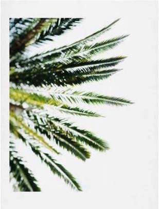 Deny Designs Beverly Hills Palm Print